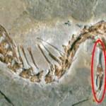 Tiriama, kaip per evoliuciją gyvatės neteko kojų