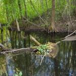 Už Lietuvos gamtos vertybių išsaugojimą