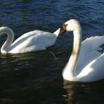 Baltiški paukščių vardai