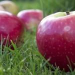 Obuolių ar varlių lietūs – retas, bet realus reiškinys