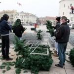 Kalėdų eglė Katedros aikštėje bus įžiebta gruodžio 3-iąją