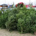 """Sausio 6 dieną prasidės Aplinkos ministerijos globojama akcija """"Kalėdinė eglutė – namų šilumai"""""""