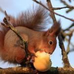 Sveikiname su 2012 pavasario lygiadieniu ir Voverės metais