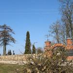 Žaliam senųjų kapinių medžių atminimui