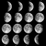 Mėnulio ir zodiako ženklų įtaka augalų persodinimui