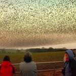 Ornitologai tiria tūkstančių paklydusių paukščių žūtį jūroje palei pietinę Anglijos pakrantę
