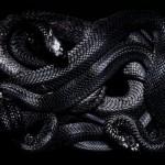Gyvatės metai-2013 metų horoskopas pagal Jupiterį