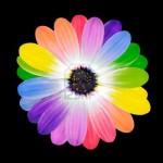 Gėlė jūsų Zodiako ženklui