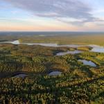 Ar Lietuva išliks miškų valstybe?