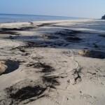 Gintaro ieškotojai niokoja Lenkijos paplūdimius