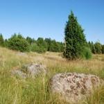 Lietuviškoji tundra saugo Perkūno akmens paslaptis