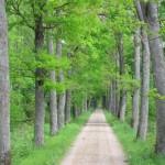 Svarbu užtikrinti medžių gerovę