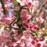 Šalnos kanda sodus: kaip apsaugoti augalus?