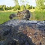 Žaibų plakamo akmens mįslės