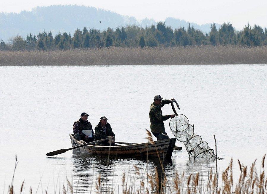 Žvejai gaudo ungurius