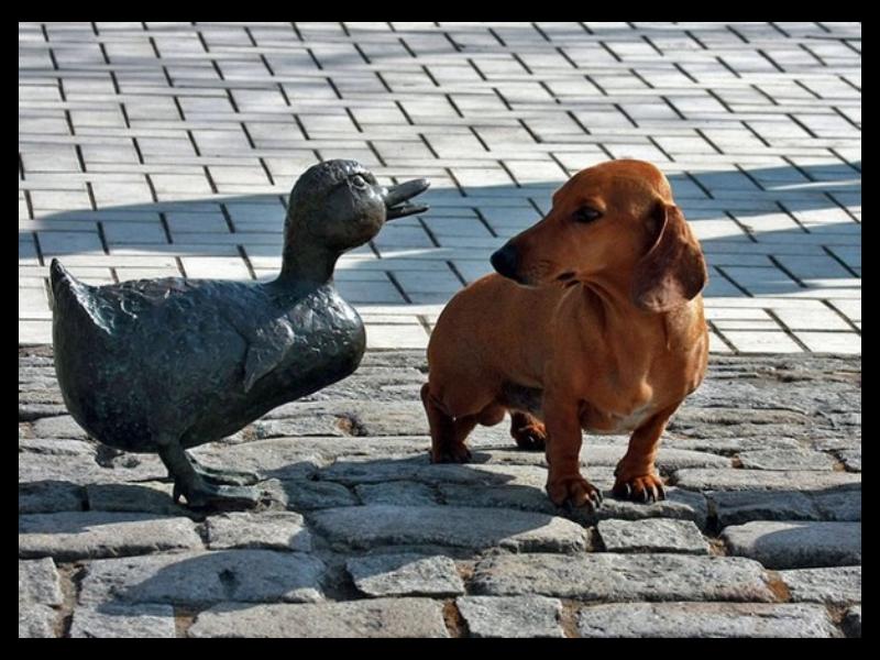 """Shutterstock nuotrauka """"Joniukas ir Grytutė"""""""