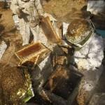 Meduje esančios bakterijos gydo nuo ligų, prieš kurias bejėgiai ir antibiotikai
