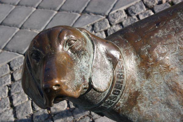 """Turgaus aikštėje Skulptūra ,, Lietuvių skalikas"""" informuoja apie tai, kad skalikų šunų veislė XX a. baigė sunykti. telšiškis Z.Goštautas ją atkūrė."""