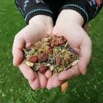 Liaudies medicina Mielagėnų ir Ceikinių apylinkėse