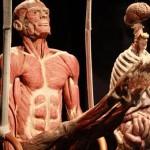 Kaune - žmogaus kūnų paroda