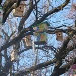 Miškininkai kviečia pasitikti paukščius