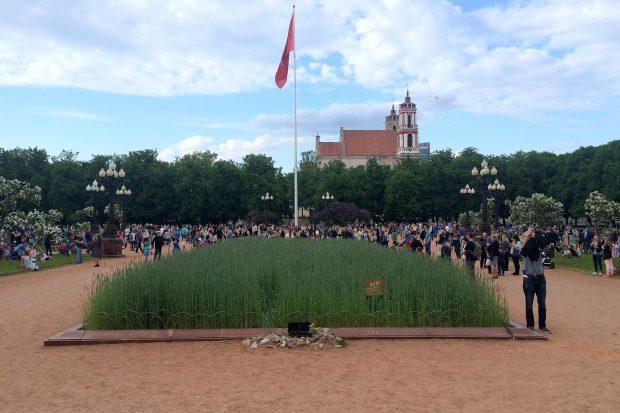 Rugių laukas Vilniaus centre stebina netikėtais garsais Organizatorių nuotr.