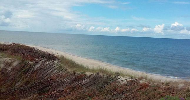 PROCESAS. Kopų apsaugai naudojamos pušų šakos, sausuoliai, kuriais padengiamos pažeistos vietos - vėjas neturi galimybių išjudinti smėlio. Vėliau dirba gamta - žabų klojiniai užnešami smėliu, įsitvirtina augmenija.