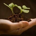 """""""Ekologinės žemdirbystės lietuviai imasi dėl ekonominių motyvų"""""""