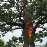 Nufotografuota, kaip į  žemaičių Plokščių ąžuolą trenkė žaibas
