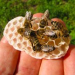 Visos vasaros medunešis – labai mažas
