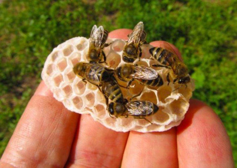 123rf.com / Bitės ir korys.