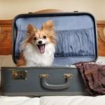 Kai kurie draudimai dėl šunų Lietuvoje – protu nesuvokiami