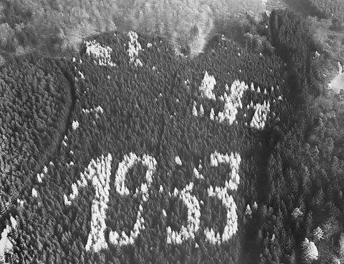 """Im hessischen Asterode entdeckte 1933 ein Förster am Südhang eines Fichtenwaldes ein aus Lärchen gepflanztes """"1933"""" und ein Hakenkreuz. Die Schandflecke blieben lange unverändert - bis sich in den sechziger Jahren die US-Besatzer bei der Landesregierung beschwerten, als sie das Hakenkreuz und die Jahreszahl bei Luftaufklärungsflügen erspähten. Einige der Bäume wurden daraufhin abgeholzt, die NS-Symbolik war aber weiterhinzu erkennen. Erst nach Stürmen 1990 war sie dann nicht mehr sichtbar.http://www.explorate.de/Forum/attachment.php?attachmentid=6661&d=1153162408"""