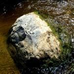 Geologai išrinko nacionalinį Lietuvos akmenį