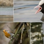 Pavasaris miške: linksmi paukščių portretai