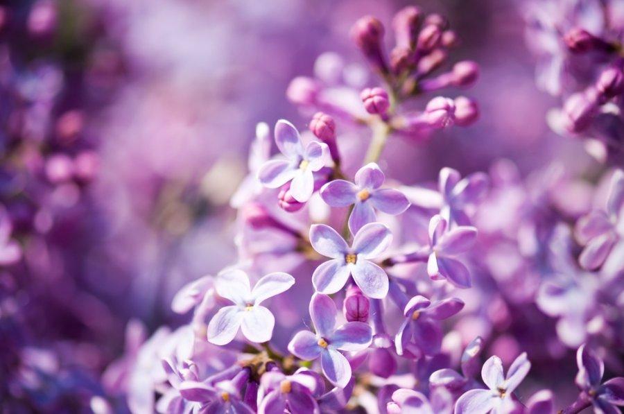 © Shutterstock nuotr.