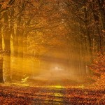 Kokį likusį rudenį žada sinoptikai?