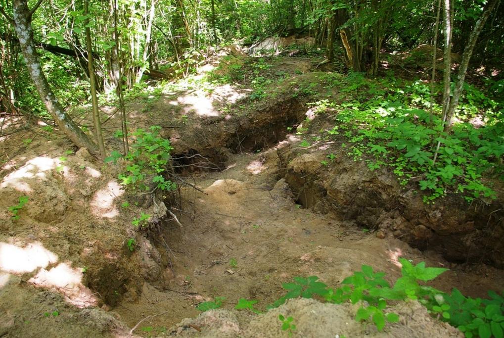 Archeologinių dirbinių plėšikų iškasinėtas Poškaičių kapinynas
