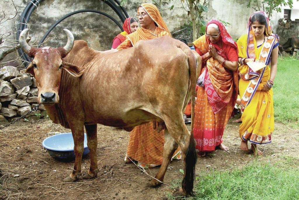 karves ir indija