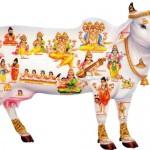Karvės ir jaučio religinė reikšmė vedinėje religijoje