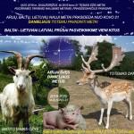 APIE ATEINANČIUS 2019 METUS - SVEIKINIMAI TIKRIEMS TAUTIEČIAMS