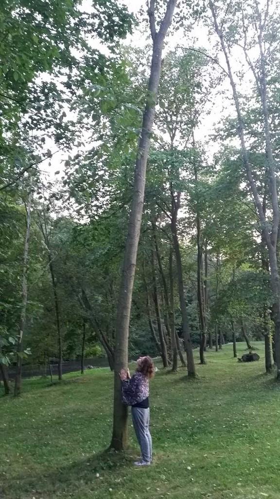 Gamtojauta. Bandymas sudaryti lytos ryšį su medžiu. Autoriaus nuotrauka
