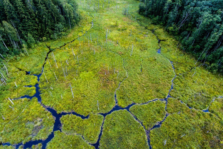 Europą vienija gamtos išsaugojimo idėja: prisidėti gali kiekvienas