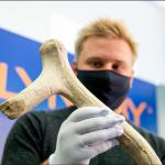 Biržų rajono Parupės kaime atrastas 13 000 m. kaulinis kirvis